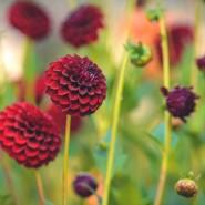 Цветочная выставка «Краски лета» в Ботаническом саду 2017 фотографии