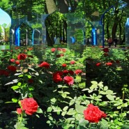 Фестиваль «Императорские сады России» 2017 фотографии
