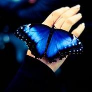 «Сад бабочек» фотографии