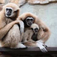 День всех влюбленных в Ленинградском зоопарке 2019 фотографии