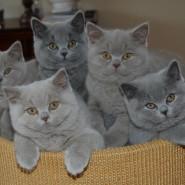 Фестиваль «Британские коты» фотографии