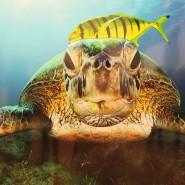 Фестиваль Дикой Природы «Золотая Черепаха» в Санкт-Петербурге 2017 фотографии