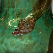 Выставка «Стекло, которым любовались. Шедевры XVI-XX веков в собрании Государственного Эрмитажа» фотографии