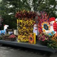 Фестиваль цветов в Санкт-Петербурге 2020 фотографии