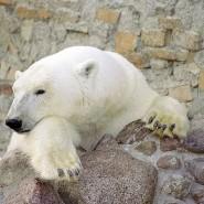 День Рождения белой медведицы Услады 2019 фотографии