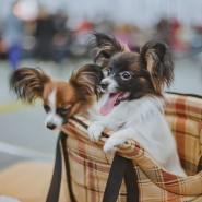 Выставка «Город собак» 2017 фотографии
