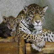 Выставка «В зоопарке у зверей...» фотографии