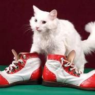 Спектакль «Коты-мореходы» фотографии
