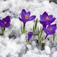 Топ-10 интересных событий в Санкт-Петербурге на выходные 17 и 18 марта фотографии