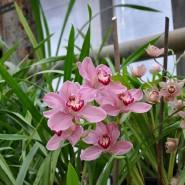 Выставка орхидей «Осколки радуги» 2018 фотографии