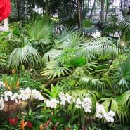 Новогодние каникулы в Ботаническом саду 2018 фотографии