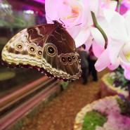 Выставка «Тропический дом» фотографии