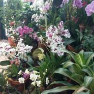 Выставка орхидей в Ботаническом саду 2016 фотографии
