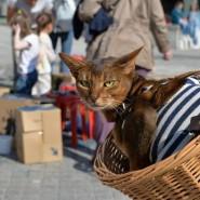 Всемирный день Петербургских котов 2019 фотографии
