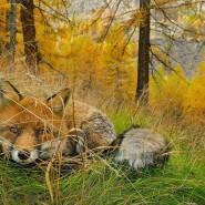Фотовыставка «Дикая природа России» 2017 фотографии
