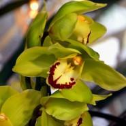 Выставка орхидей «Осколки радуги» в Ботаническом саду 2020 фотографии
