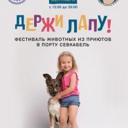 Фестиваль животных из приютов «Держи лапу!» 2018 фотографии
