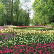 Фестиваль тюльпанов на Елагином острове онлайн фотографии