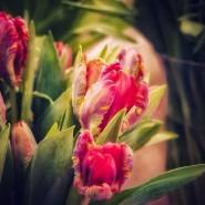Фестиваль «Мечты о весне» фотографии