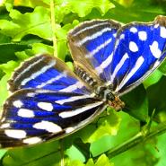 Тропический комплекс «Миндо» фотографии