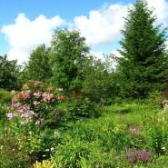Лекции «Содружества любителей декоративных садовых растений» фотографии