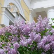 Праздник-прогулка «Сиреневый променад в Павловском парке» 2017 фотографии