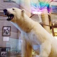 Музей Арктики и Антарктики фотографии