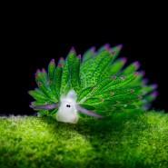 Выставка 100 чудес света. Подводный мир» фотографии