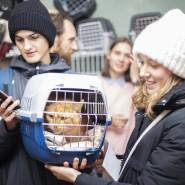 Выставка — пристройство кошек «Новогоднее чудо» фотографии