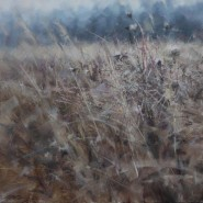 Выставка «Касаясь ветра» фотографии
