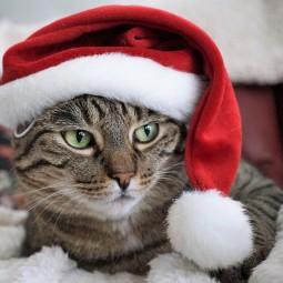 Спектакль «Новый год и кошки. В.Куклачев»
