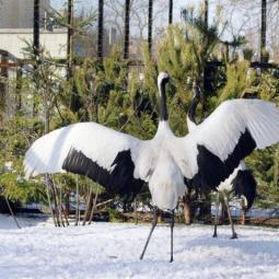 День всех влюбленных в Ленинградском зоопарке 2019