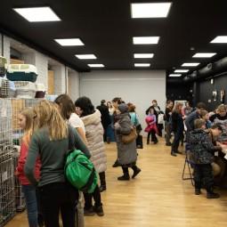 Благотворительная выставка «Високосный кот»