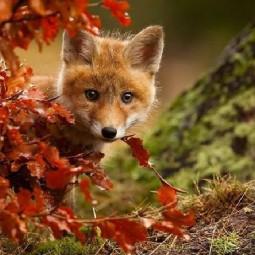 Фестиваль Ginger Fox Day 2016
