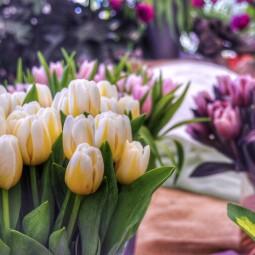 Фестиваль «Мечты о весне»