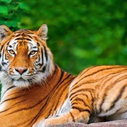 День тигра в Ленинградском зоопарке 2017