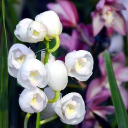 Выставка орхидей «Осколки радуги» в Ботаническом саду 2020