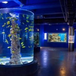 Выставка рыбок-петушков в Океанариуме