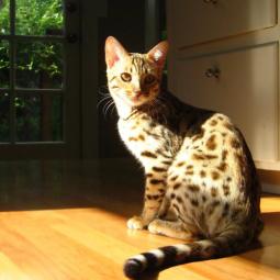 Public talk о кошках «От умиления до осознанности: как понять свою кошку?»