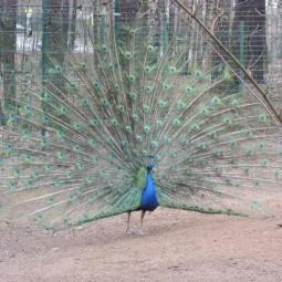 Контактный зоопарк «Радуга»