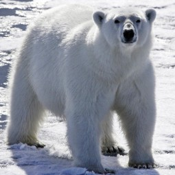 «День белого медведя» в Этнографическом музее