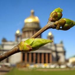 Топ-10 интересных событий в Санкт-Петербурге на выходные с 29 апреля по 2 мая