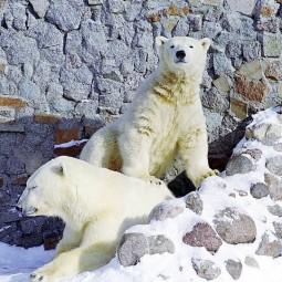 День Рождения Белой медведицы в Ленинградском зоопарке