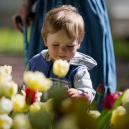 Фестиваль тюльпанов на Елагином острове 2021