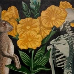 Выставка «Игорь Баранов. Herbarium»