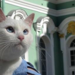Праздник «День Эрмитажного Кота» 2019
