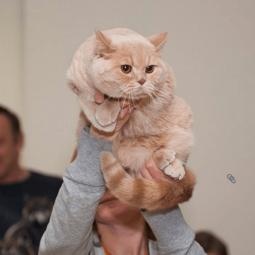 Выставка кошек   «В гостях у САФФИ» 2016