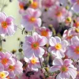 Праздник цветов «ЦветоБум» 2017