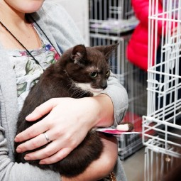 Выставка кошек «Кот Морган рекомендует себя»