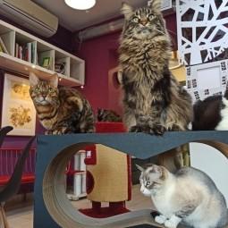Петербургское котокафе «Республика котов» онлайн